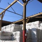 We were heavily involved in surveying damages suffered by the cotton industry by Hurricane Ike